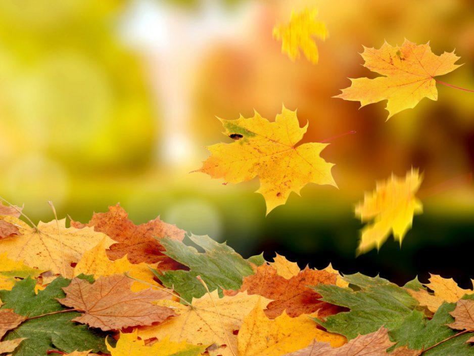 13 октября «Листья желтые над городом кружатся…»