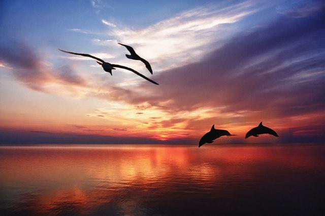 28 октября |«Гармонии таинственная страсть»