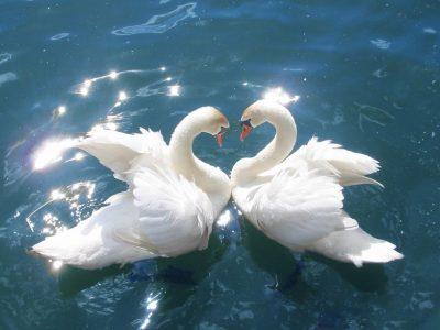 27 января | «Вечная любовь»