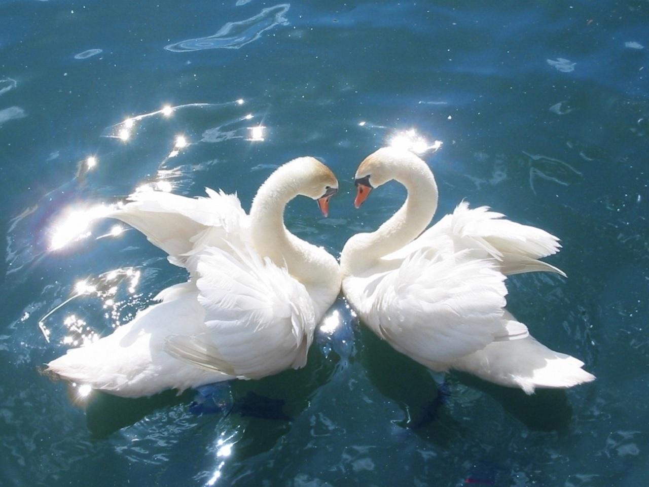 27 января   «Вечная любовь»