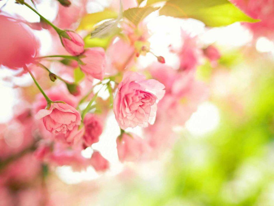 13 апреля Открытие XXVII Фестиваля классической музыки «Дальневосточная Весна»