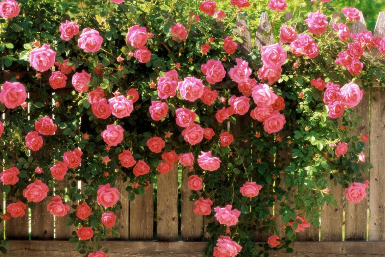 29 марта «Цветут  сады  в душе у нас»