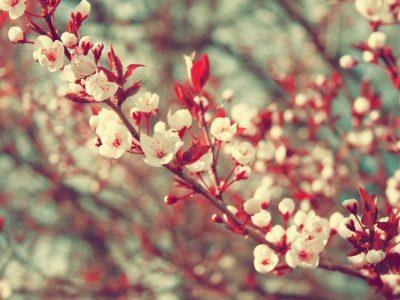 26 апреля «СЫГРАЕМ  НА  BIS!»