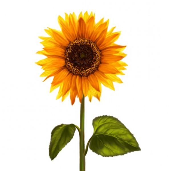 1 июня «Солнечный круг»