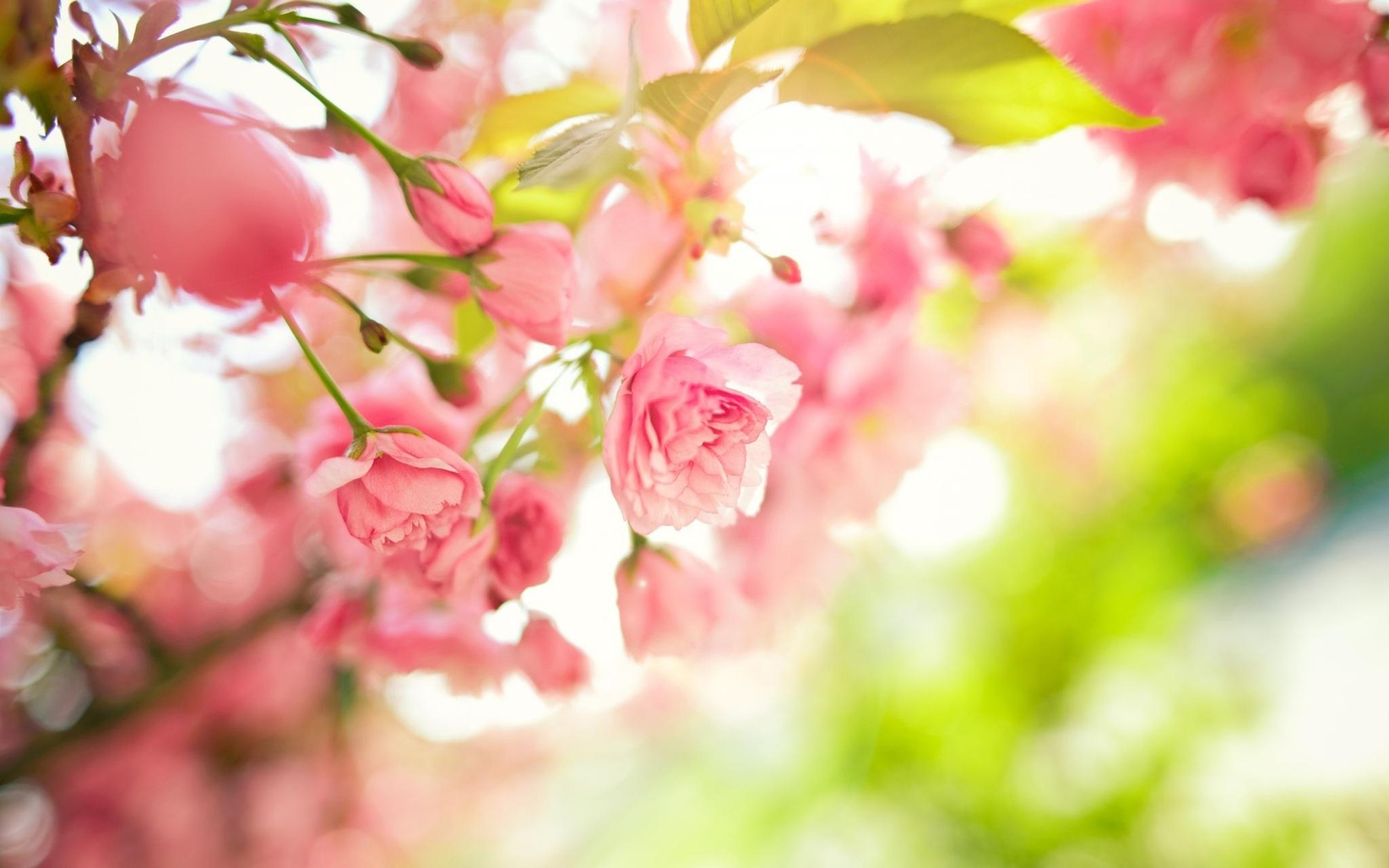 «Дальневосточная весна» будет виртуозной!